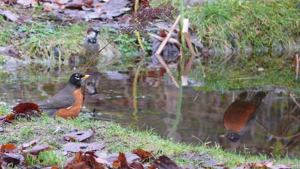 febpondbirds