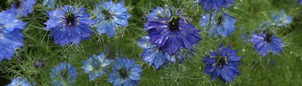 Virdigris Gardening